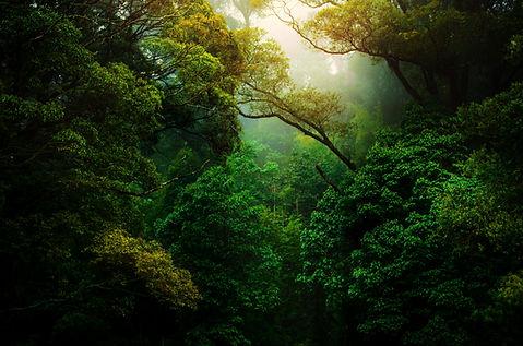 Quem Somos EcoValor Consultoria em Sustentabilidade