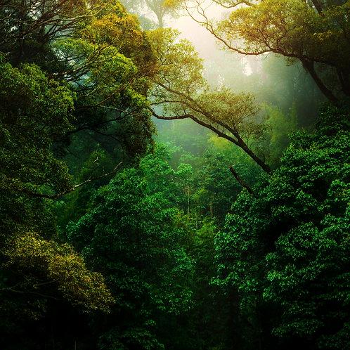 L'incantesimo degli esseri della natura