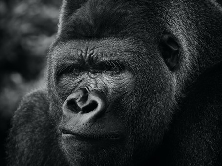 Eat like a gorilla to have strong bones.