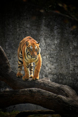 Image by Rishabh Pandoh