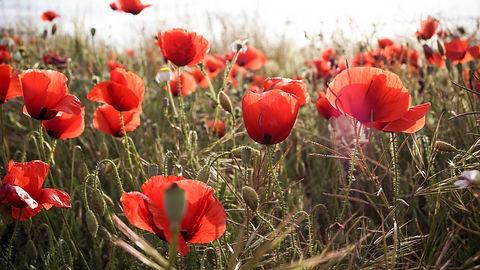 Image de Flor