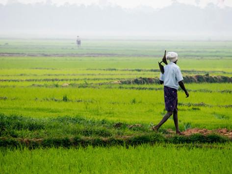 Siaran Pers   Kesejahteraan Petani Dapat Diupayakan Lewat Peningkatan Produktivitas