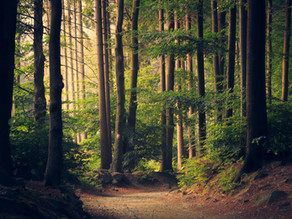 Mindfulness (and Healing) in Nature