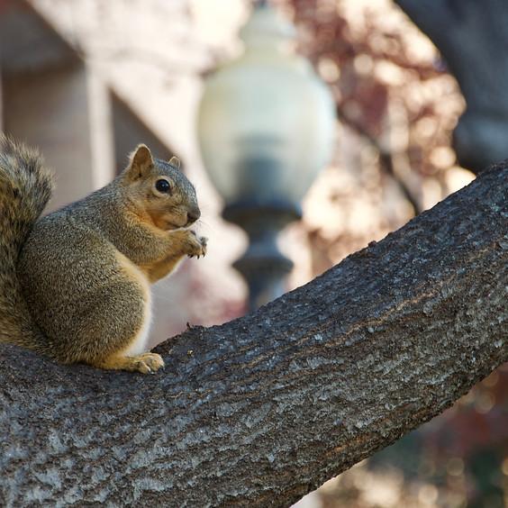 Educational Program: Tracking Texas Wildlife
