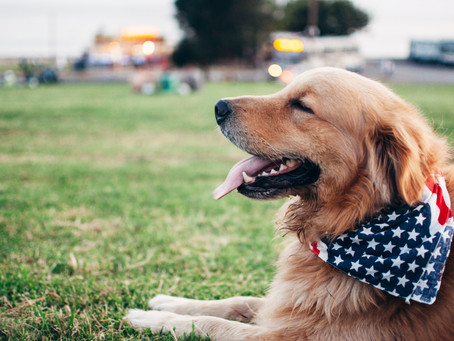 Tips for Keeping Your Pets Safe During Fireworks