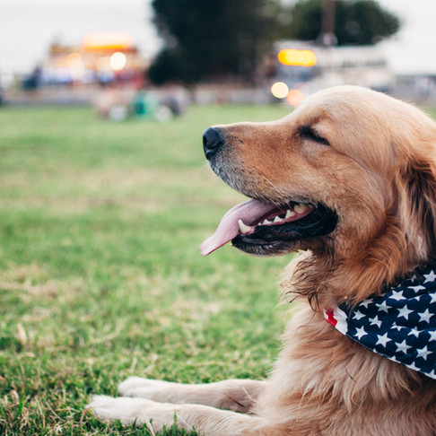 Keeping Your Pets Safe for July 4th