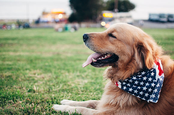 Leader Dogs for the Blind Summer Camp