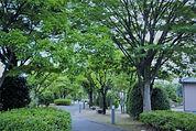 Image by Hisae Kuroda