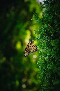Image by Thula Na