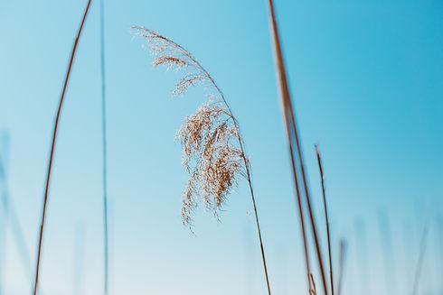 Image by Birgith Roosipuu