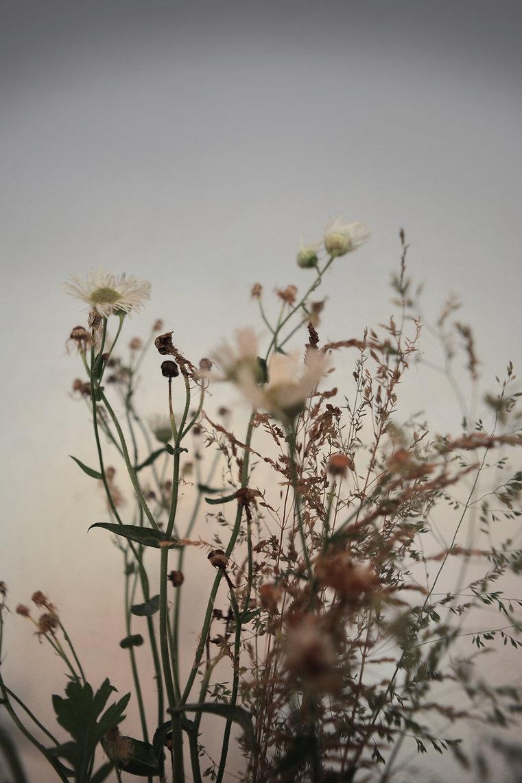 Image by Christina Deravedisian