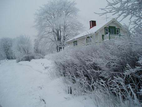 Tips to Winterize Your Backyard