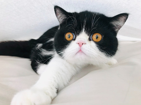 Что делать, если кот подрал все,что есть в доме?