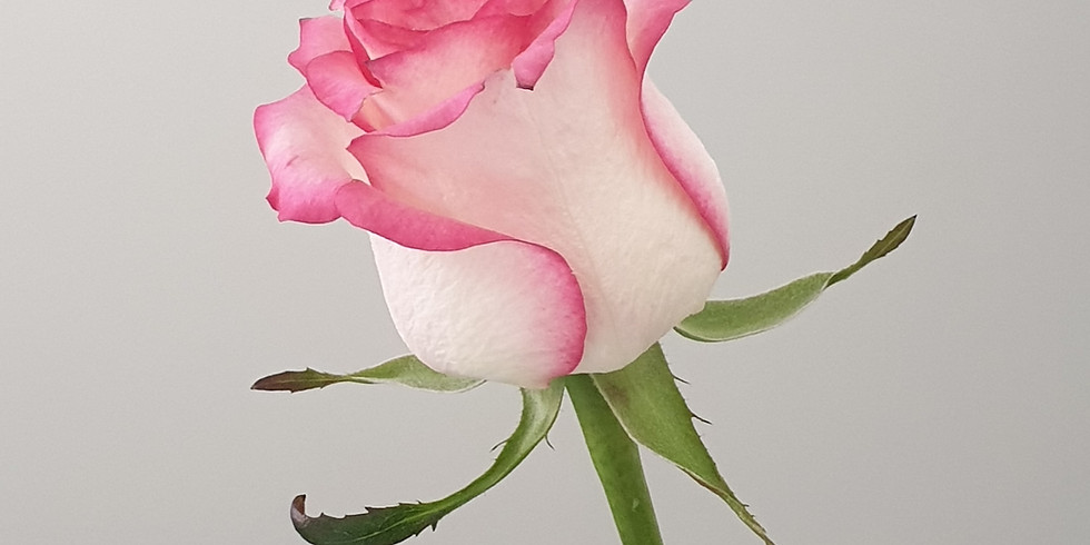 Valentine's Day Rose Giveaway