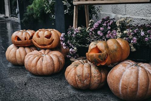 """Pumpkin Fairytale- 2.5"""" Pot"""