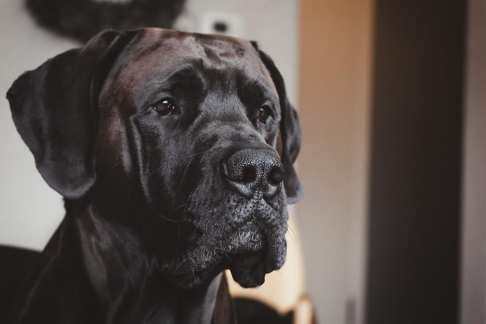 Dog intestinal surgery san diego veterinarian