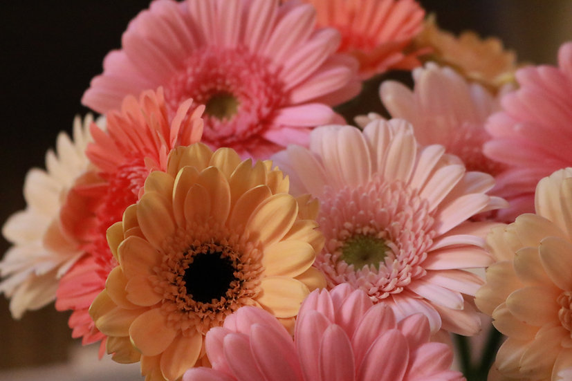 Special offers: May best in bloom