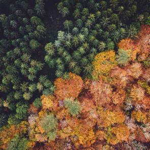 Ecology & Environmental Risk