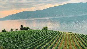 View overlooking Lake Okanagan and rows of grape vines. Plan my trip to Kelowna