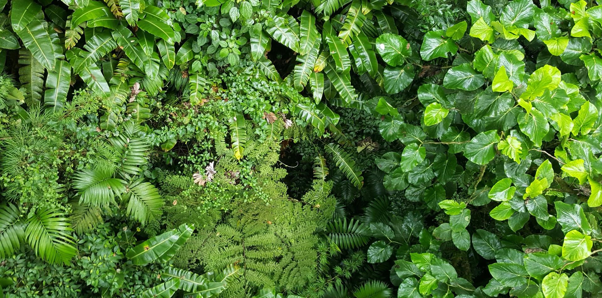 JOUR 5 – Caño Negro / Monteverde (±3h30)