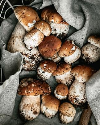 Арда Лиси, Свежие,замороженные,сушеные,соленые грибы,замороженные ягоды