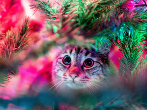 Christmas Safety Tips for Pet Parents