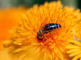 Honig ist nicht immer gleich Honig ;-)