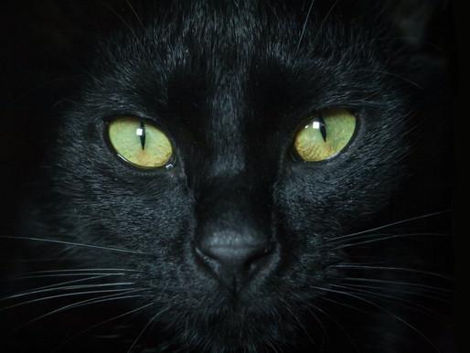 The Black Cat of Fastelavn