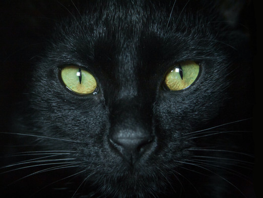 The Black Cat of Fastelavn