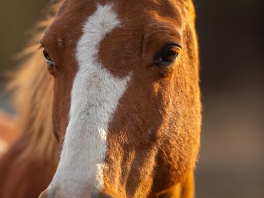 Meet Alachua's Resident Horse Riding Teacher and Wiccan Priestess