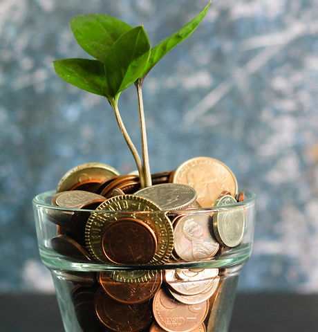 Image of plant in pot of coins