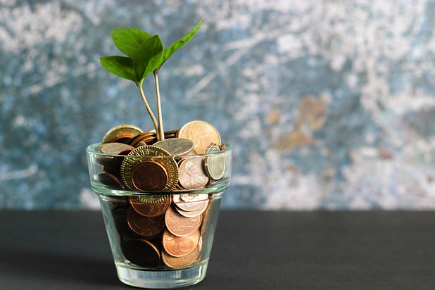 Money in cup plant growing