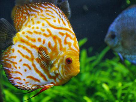 Freshwater Fish 7/17