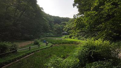 Markham Regional Arboretum