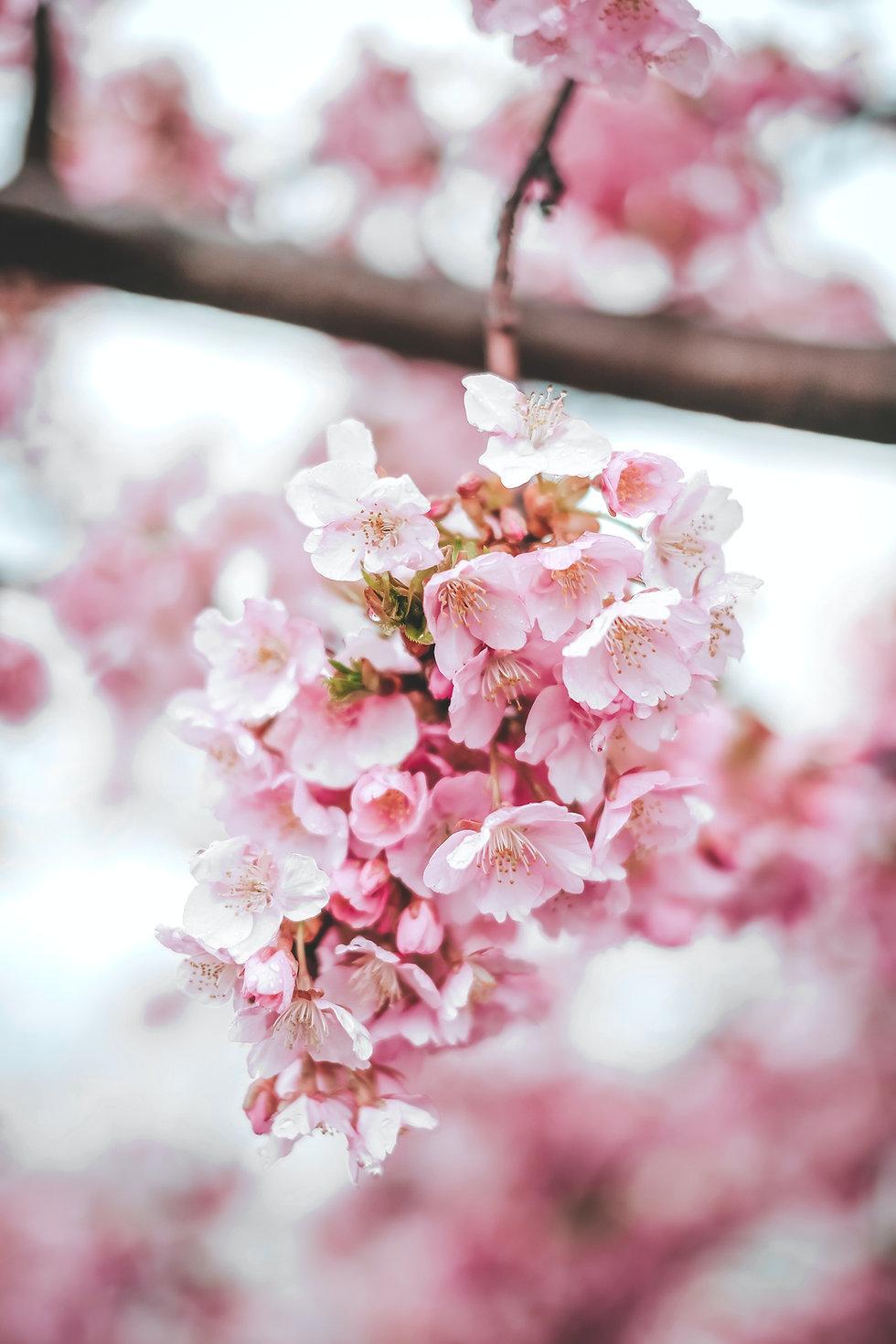 Image by Fuu J
