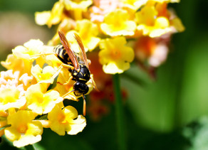 What a Wasp Sting Reminded Me About OCD/Anxiety Treatment