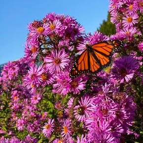 Easy-to-Grow Pollinator Plants