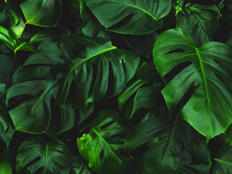 5 Ways Houseplants Make Us Better Humans