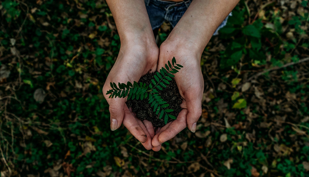 two cupped hands holding a seedling of a fern over a forest floor