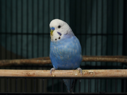 Michigan man stomps bird to death after pet store refuses to refund his $30