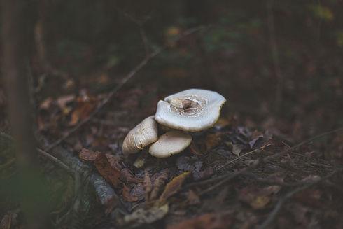 Image by Drew Beamer