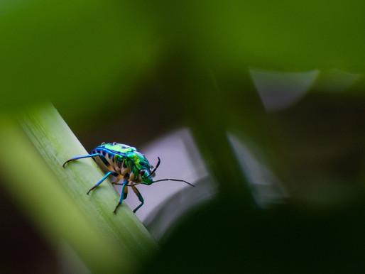 6 Simple Secrets for a Pest-Free Garden