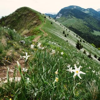 Mountain biking trails in the Austrian mountains