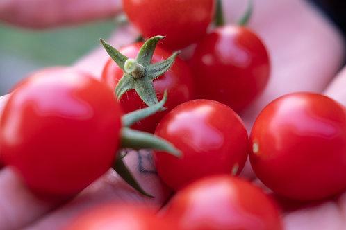 Organic Red cherry Tomato Seeds