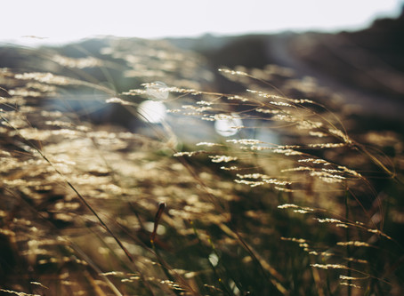 Öykü- Çiğdem Bilgin- Rüzgâr Uyumuş Ay Dalıyor
