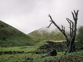 Upon the Tree, by Ragnarök