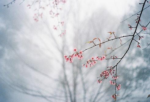 Image by Mink Mingle