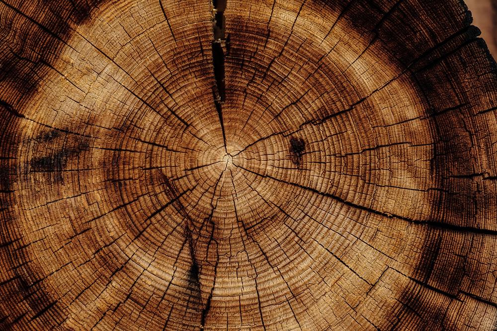 Wood Element represents Growth