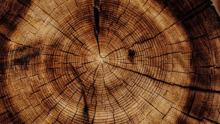 「欅の木のように力強い人間に」