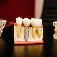 Dentists & Orthodontists